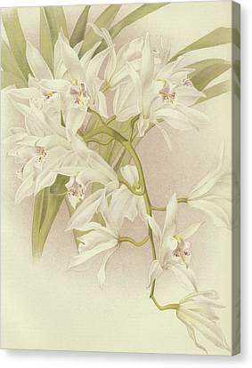 Boat Orchid  Cymbidium Canvas Print by English School