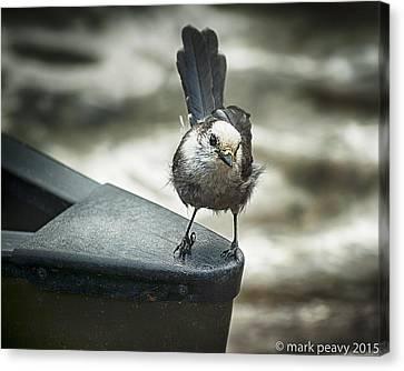 Boat Sparrow Canvas Print