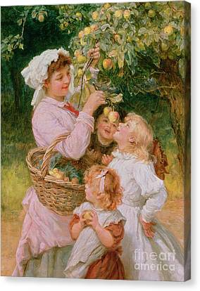 Bob Apple Canvas Print by Frederick Morgan