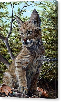 Baby Bobcat Canvas Print - Bobbi Anne by Peggy Sircy