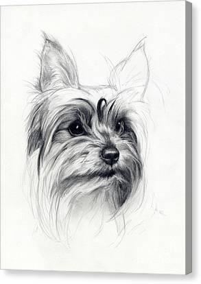 Bobby Canvas Print by Tim Thorpe