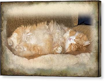 Bobcat Asleep Canvas Print by Mother Nature