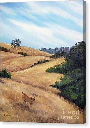 Bobcat At Rancho San Antonio Canvas Print by Laura Iverson