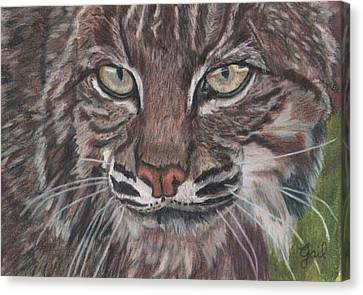 Bobcat Eyes Canvas Print by Gail Seufferlein