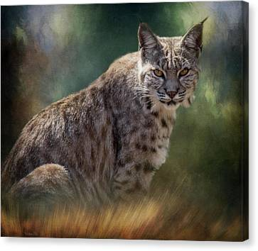Bobcat Gaze Canvas Print