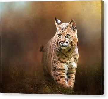 Bobcat I Canvas Print