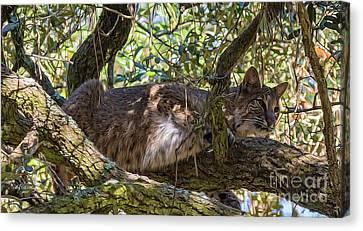 Bobcat Living High Canvas Print