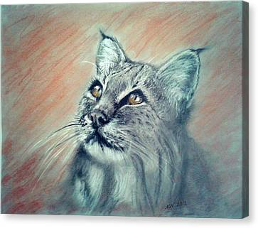 Bobcat Canvas Print by Michelle Wolff