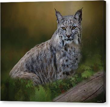 Bobcat On Alert Canvas Print