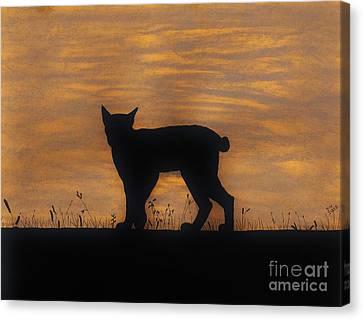 Bobcat - Sunset Canvas Print by D Hackett