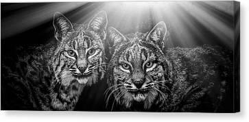 Bobcats Canvas Print by Elaine Malott