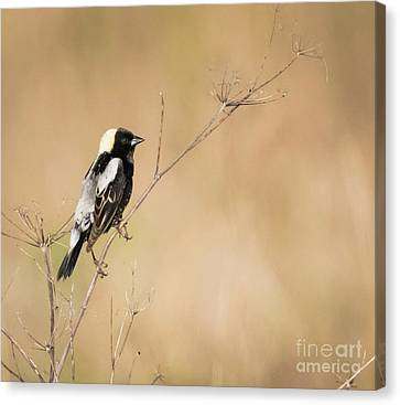 Canvas Print featuring the photograph Bobolink  by Ricky L Jones