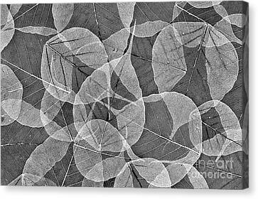 Bodhi Tree Leaves Canvas Print by Tim Gainey