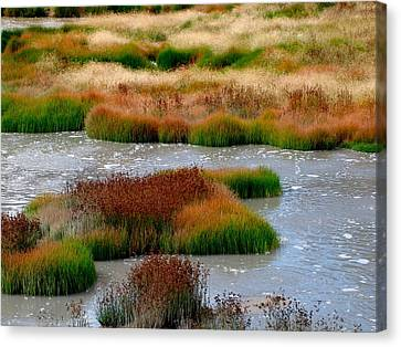 Boiling Mud And Grass Canvas Print