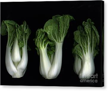 Bok Choy Canvas Print by Christian Slanec