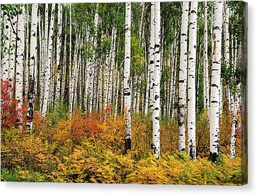 Canvas Print featuring the photograph Bold And Magnificent Autumn by Tim Reaves