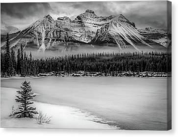 Bold Banff Canvas Print by Gary Migues