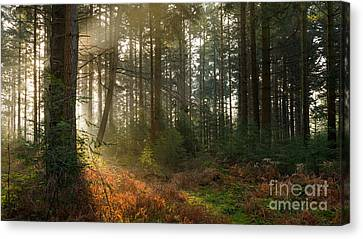 Bolderwood Morning I Canvas Print by Richard Thomas