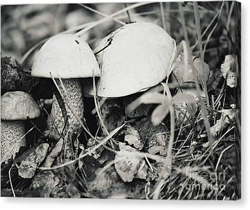 Canvas Print featuring the photograph Boletus Mushrooms by Juls Adams