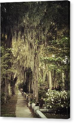 Azaleas Canvas Print - Bonaventure Cemetery Lane by Joan Carroll