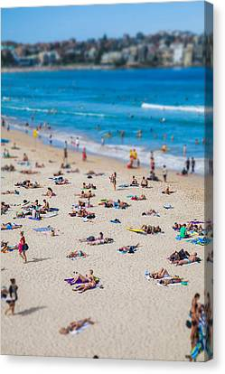 Swimmers Canvas Print - Bondi People by Az Jackson