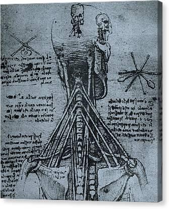 Bone Structure Of The Human Neck And Shoulder Canvas Print by Leonardo Da Vinci
