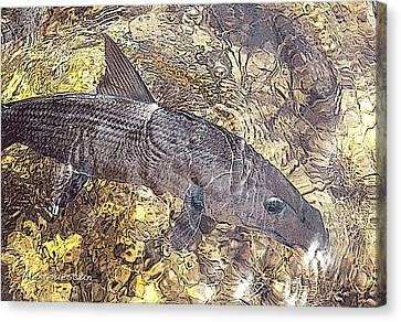 Bonefish World Canvas Print by Alex Suescun