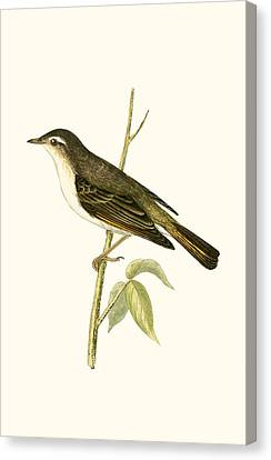 Bonelli's Warbler Canvas Print by English School