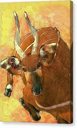Sudan Red Canvas Print - Bongo 2 by Jack Zulli