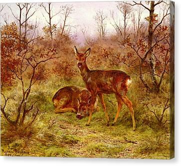 Bonh Rosa Un Couple De Chevreuils Dans Le Foret De Fontainebleau Canvas Print