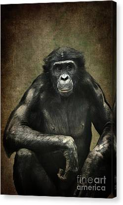 Bonobo Canvas Print by Angela Doelling AD DESIGN Photo and PhotoArt