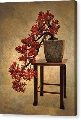 Bonsai Beauty Canvas Print by Jessica Jenney