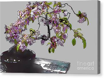 Bonsai Beauty Canvas Print by Linda  Parker
