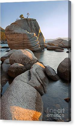 Lake Tahoe - Bonsai Rock Canvas Print by Francesco Emanuele Carucci