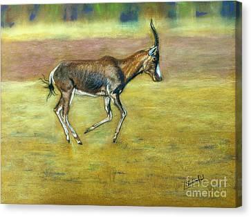 Bontebok Canvas Print