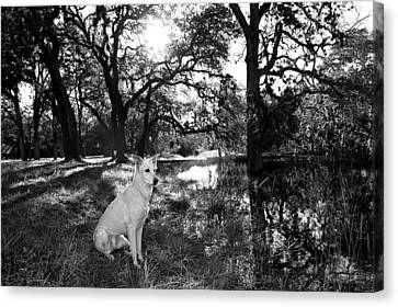 Boo Ranch Dog Canvas Print by Jimmy Bruch