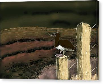 Sombre Canvas Print - Booby Bird - Night Time by Huth Anne