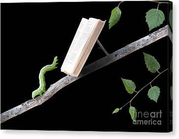 Book Worm Canvas Print by Cindy Singleton