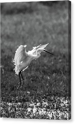 Book_cover_snowy Egret Canvas Print