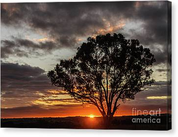 Boorowa Sunset Canvas Print
