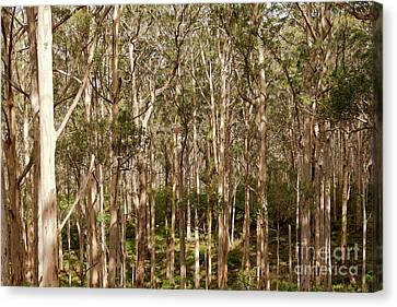 Canvas Print featuring the photograph Boranup Forest  by Ivy Ho