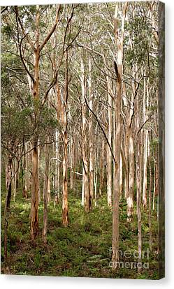 Boranup Forest Portrait Canvas Print by Ivy Ho