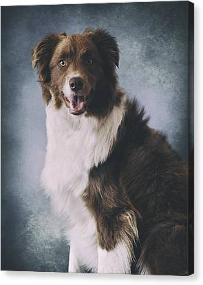 Border Collie Portrait Canvas Print by Wolf Shadow  Photography