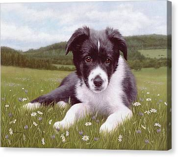 Border Collie Puppy Painting Canvas Print by Rachel Stribbling