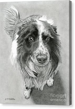 Realism Canvas Print - Border Collie by Sarah Batalka
