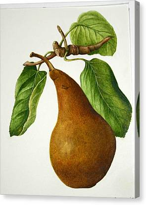 Canvas Print featuring the painting Bosc Pear by Margit Sampogna
