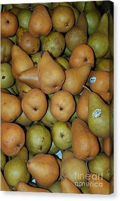 Bosch Pears Canvas Print by Mia Alexander