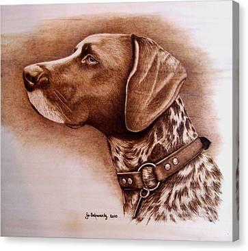 Boscoe Canvas Print by Jo Schwartz