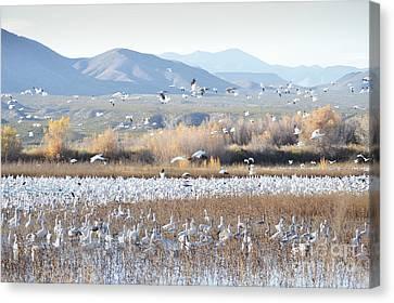 Bosque Del Apache Snow Geese Landscape Canvas Print by Andrea Hazel Ihlefeld