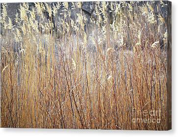 Canvas Print featuring the photograph Bosque Desert Willows by Andrea Hazel Ihlefeld